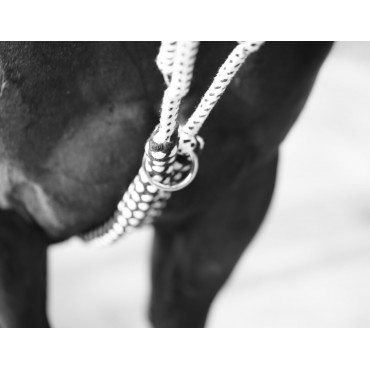 CANTER - Enrênement Soft Rope • Sud Equi'Passion