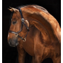 Licol anatomique en cuir Rambo Micklem HORSEWARE